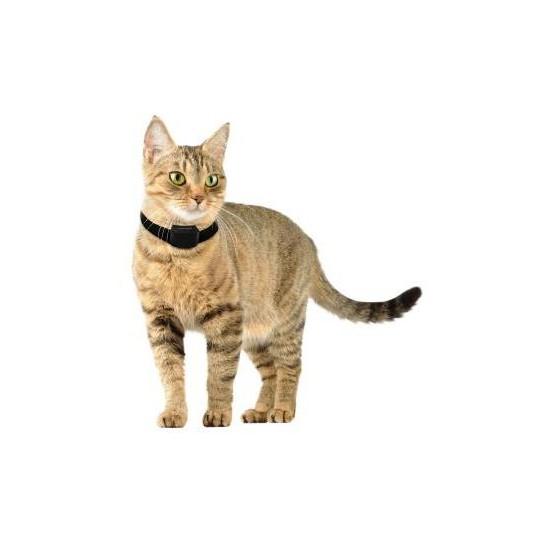 collier anti fugue pour chats et petits chiens canifugue small num 39 axes. Black Bedroom Furniture Sets. Home Design Ideas