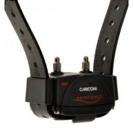 Canicom training collar with black strap